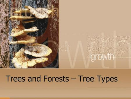 Trees and Forests – Tree Types. Tree Types There are many thousands of different kinds of trees but all true trees are separated into two (2) basic classifications:
