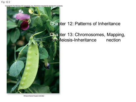 Chapter 12: Patterns of Inheritance