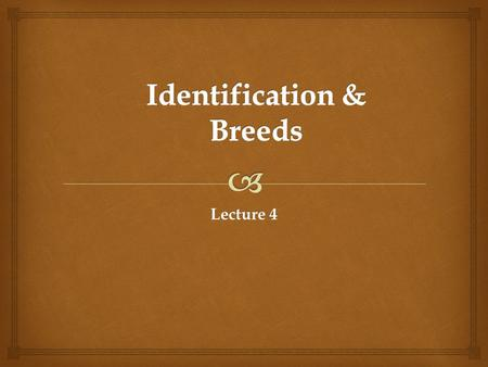 Lecture 4.   Stallion or Stud?  Gelding  Mare  Colt  Filly  Weanling  Yearling  Foal Horse Identification.