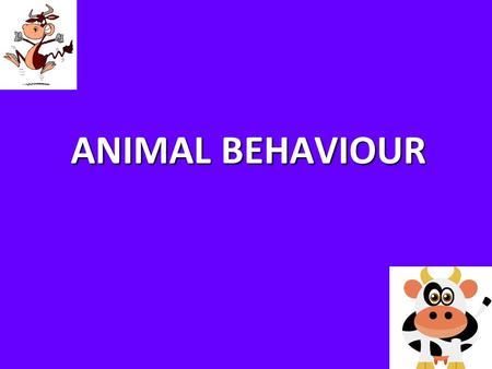 ANIMAL BEHAVIOUR.