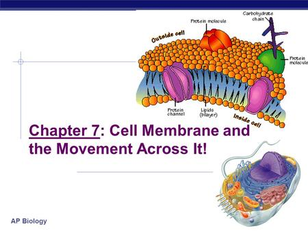 Chapter 7: Cell Membrane and the Movement Across It!