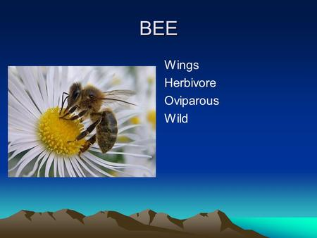 BEE Wings Herbivore Oviparous Wild. EAGLE Wings Carnivore Oviparous Wild.