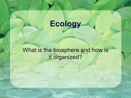 What is the biosphere and how is it organized?