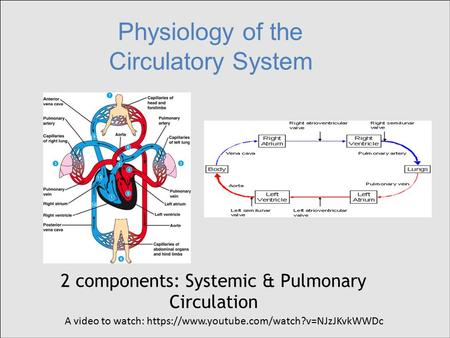 Physiology of the Circulatory System 2 components: Systemic & Pulmonary Circulation A video to watch: https://www.youtube.com/watch?v=NJzJKvkWWDc.