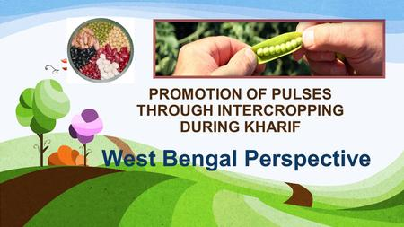 PROMOTION OF PULSES THROUGH INTERCROPPING DURING KHARIF West Bengal Perspective.