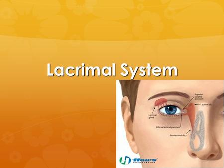 Lacrimal System.