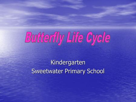 Kindergarten Sweetwater Primary School 1. The Egg The female butterfly lays an egg on a leaf. The female butterfly lays an egg on a leaf.