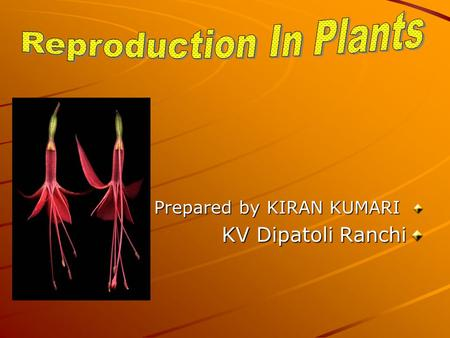 Prepared by KIRAN KUMARI KV Dipatoli Ranchi. Reproduction Reproduction: The process by which new individuals are produced is known as reproduction.