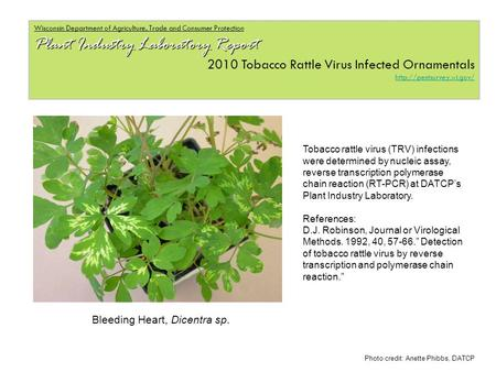 Wisconsin Department of Agriculture, Trade and Consumer Protection Plant Industry Laboratory Report 2010 Tobacco Rattle Virus Infected Ornamentals