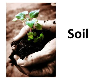 Soil. I. Physical and Chemical Properties of Soil A. Soil Texture – Relative amounts of sand, clay, and silt in the soil. Gives one of the best indicators.