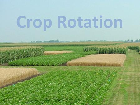 Crop Rotation. Crop Rotation: Growing plants with different types of crops in succession. Types of Crops: Root, Leaves, Fruit, Flowers, Legumes Example:
