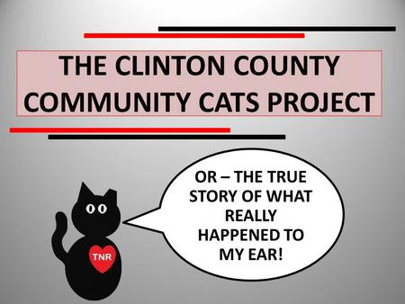 THE CLINTON COUNTY COMMUNITY CATS PROJECT OR – THE TRUE STORY OF WHAT REALLY HAPPENED TO MY EAR!