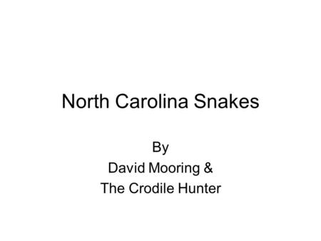 By David Mooring & The Crodile Hunter