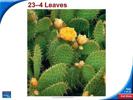 End Show Slide 1 of 32 Copyright Pearson Prentice Hall 23–4 Leaves.