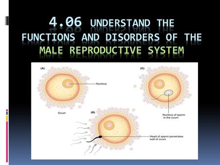 Essential questions  What is the function of the male reproductive system?  What are some common disorders of the male reproductive system?  How do.