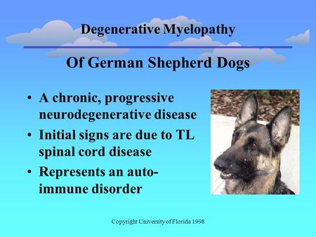 Degenerative Myelopathy Copyright University of Florida 1998 Of German Shepherd Dogs A chronic, progressive neurodegenerative disease Initial signs are.