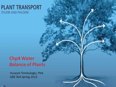 Huseyin Tombuloglu, Phd. GBE 304 Spring 2015 Chp4 Water Balance of Plants.
