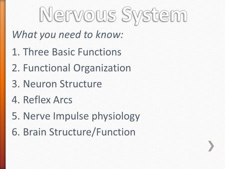 Nervous System What you need to know: Three Basic Functions