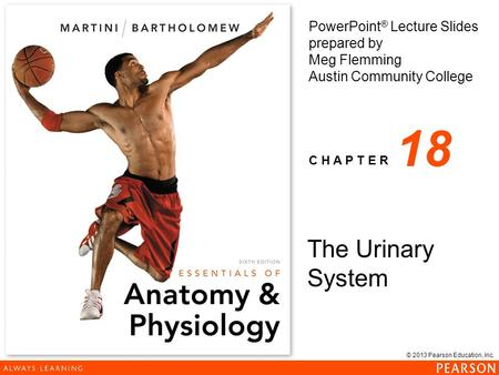 18 The Urinary System.