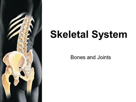 RMC Design Skeletal System Bones and Joints. RMC Design Function of the Skeletal System Five basic functions of the skeletal system: (1) Support- framework.