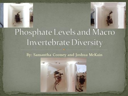 By: Samantha Cooney and Joshua McKain. Water quality differences are known to affect macro invertebrate diversity Phosphate levels are known to spike.