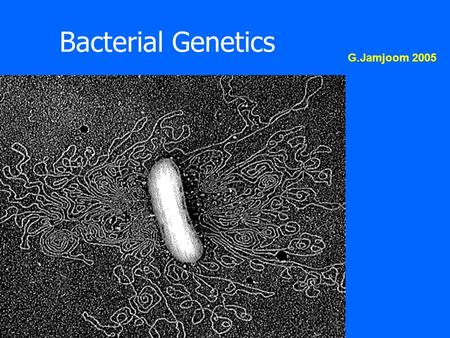 Bacterial Genetics G.Jamjoom 2005. Bacterial Genetics Lecture Outline : 1.The study of bacterial genetics helped illustrate: - the nature of genetic material.