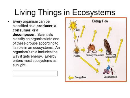 Living Things in Ecosystems Every organism can be classified as a producer, a consumer, or a decomposer. Scientists classify an organism into one of these.