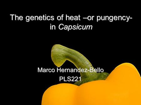 The genetics of heat –or pungency- in Capsicum Marco Hernandez-Bello PLS221.