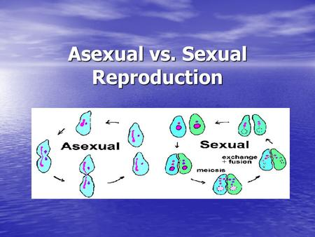 Asexual vs. Sexual Reproduction. Two basic reproductive modes Asexual reproduction Asexual reproduction - Requires only one parent - Requires only one.