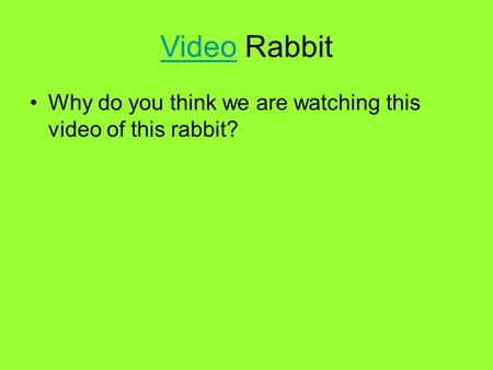 VideoVideo Rabbit Why do you think we are watching this video of this rabbit?