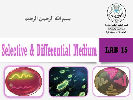 Introduction  In addition to general-purpose media, which allow the growth of most types of bacteria, microbiologists use specialized media to identify.