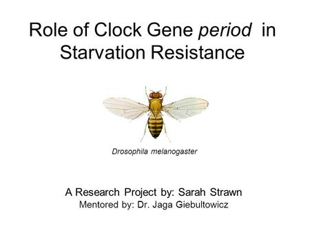 Role of Clock Gene period in Starvation Resistance