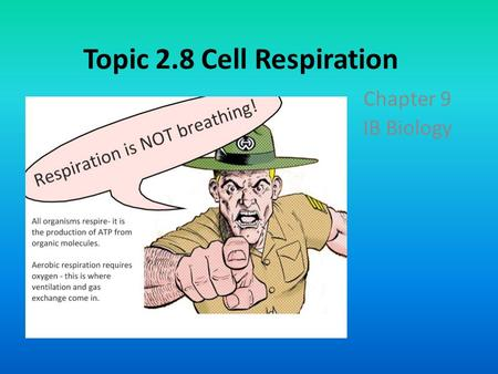 Topic 2.8 Cell Respiration
