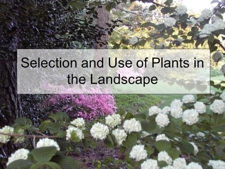 Selection and Use of Plants in the Landscape. Reasons for Choosing Plants Aesthetic appeal - attractiveness Function – a specific purpose in the landscape.