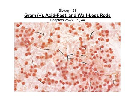 Biology 431 Gram (+), Acid-Fast, and Wall-Less Rods Chapters 25-27, 29, 44.