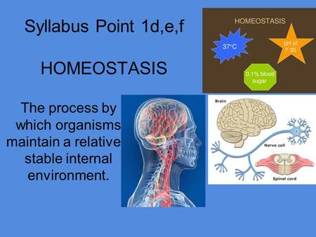 Syllabus Point 1d,e,f HOMEOSTASIS The process by which organisms maintain a relatively stable internal environment.