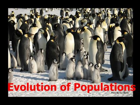 Evolution of Populations. Population Genetics Natural Selection: nature selects which individuals survive and reproduce- Evolution: occurs as a populations.