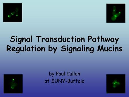 Signal Transduction Pathway Regulation by Signaling Mucins by Paul Cullen at SUNY-Buffalo.