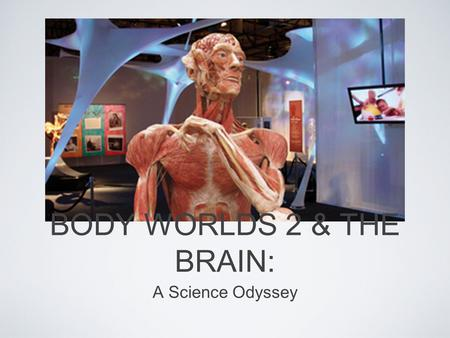 BODY WORLDS 2 & THE BRAIN: A Science Odyssey. EDUS 516 Body Worlds 2 Field Trip Holly Lewis Kim Harner Carl Peahota Dan Hufford.