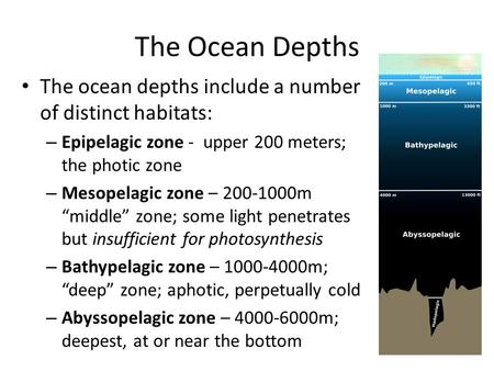 The Ocean Depths The ocean depths include a number of distinct habitats: – Epipelagic zone - upper 200 meters; the photic zone – Mesopelagic zone – 200-1000m.