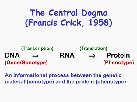 The Central Dogma (Francis Crick, 1958) (Transcription) (Translation) DNA  RNA  Protein (Gene/Genotype) (Phenotype) An informational process between.
