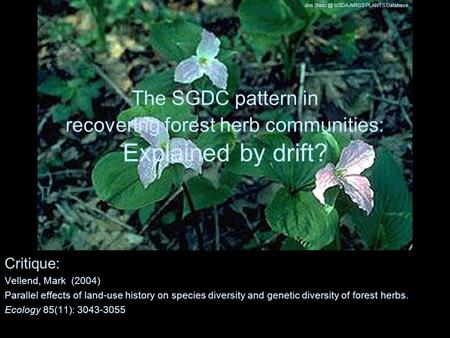 The SGDC pattern in recovering forest herb communities: Explained by drift? Critique: Vellend, Mark (2004) Parallel effects of land-use history on species.