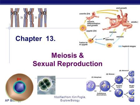 AP Biology Modified from: Kim Foglia, Explore Biology Chapter 13. Meiosis & Sexual Reproduction.