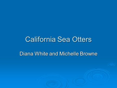 California Sea Otters Diana White and Michelle Browne.