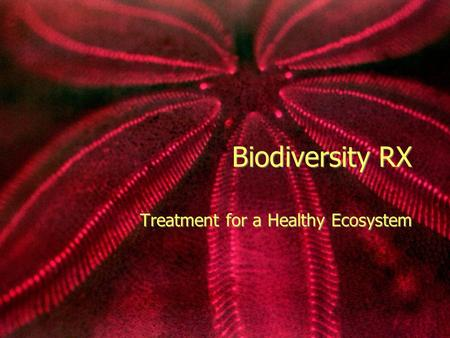 Biodiversity RX Treatment for a Healthy Ecosystem.