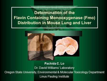 Determination of the Flavin Containing Monooxygenase (Fmo) Distribution in Mouse Lung and Liver Pachida C. Lo Dr. David Williams' Laboratory Oregon State.