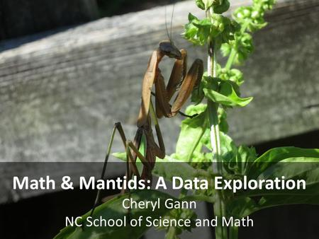 Math & Mantids: A Data Exploration Cheryl Gann NC School of Science and Math.