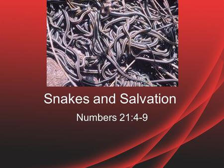 Snakes and Salvation Numbers 21:4-9. Familiar Story I am sure most of you have heard of this story –Israel complained AGAIN –God sent poisonous snakes.