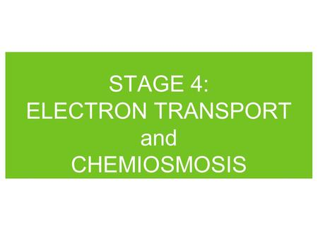 STAGE 4: ELECTRON TRANSPORT and CHEMIOSMOSIS. Electron Transport Chain (ETC) series of compounds, mainly proteins, which are associated with the inner.