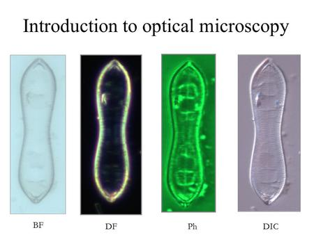 BF DICDFPh Introduction to optical microscopy. Contrast techniques in optical microscopy Introduction to optical microscopy Some basic optics Properties.